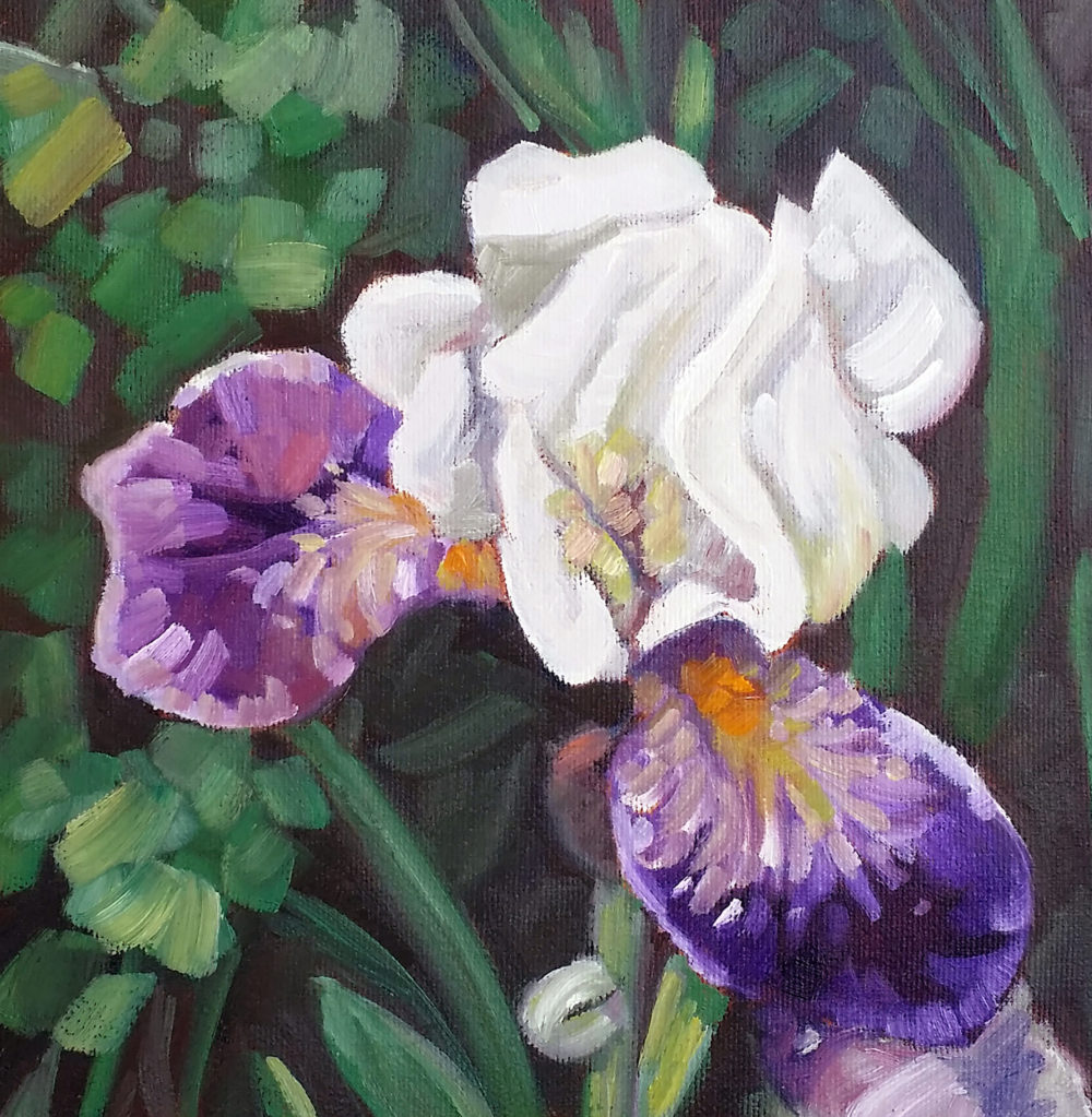 Iris l (White & Purple) - Kerry Walford